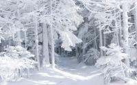 снег - лес